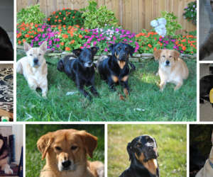 CAN A YARD SERVICE REALLY REPLACE FLEA & TICK PREVENTATIVES?
