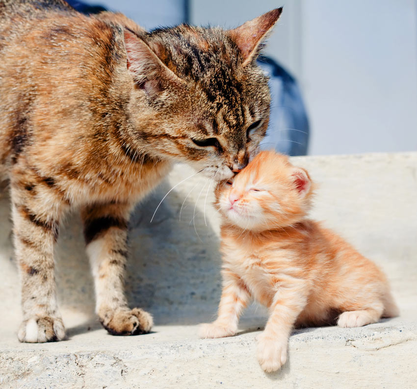 How to Introduce a New Kitten to Your Home