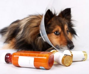 TOP 10 HUMAN MEDICATIONS POISONOUS TO PETS