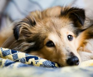 Learn More About Your Pet's Seizure Medications