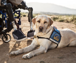 10 Things Service Dog Handlers Want You To Know