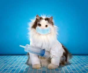 Does My Indoor Cat Need Vaccinations? Yes.