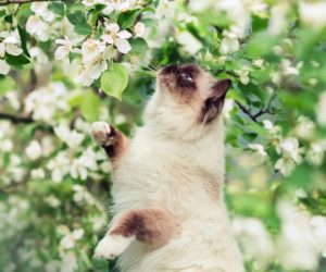 How To Know That Spring Has Sprung, According To Your Cat