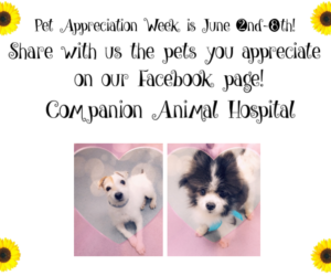 Pet Appreciation Week!