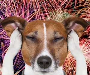Fireworks, Anxiety and Your Dogs